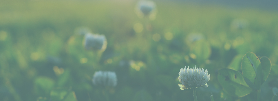 slider-4_mountainflowers2